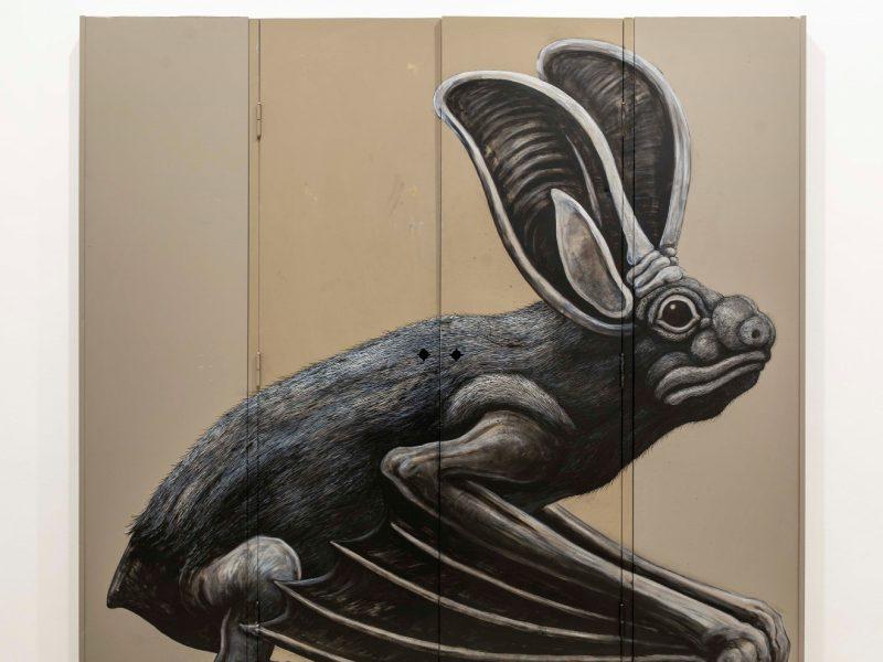 keteleer_roa_long-eared-bat
