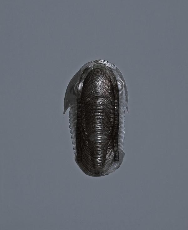 keteleer_anna-vogel_trilobite-15