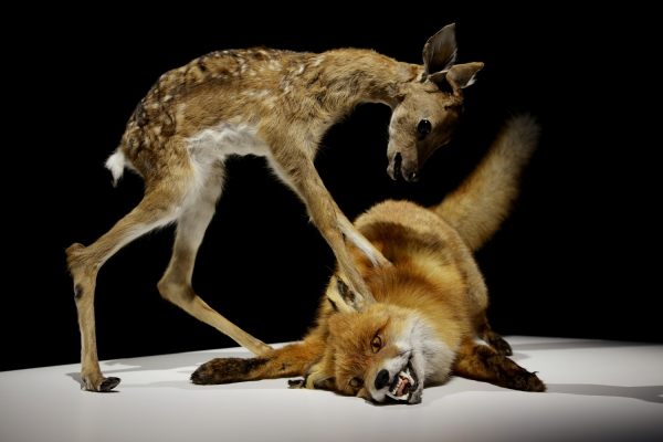keteleer_nasan-tur_taxidermic-animal-couple-fawn-fox-from-the-series-agony